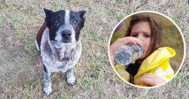 """Слепой пёс породы """"голубой хилер"""" спас девочку! Малышка заблудилась в горах дождливой ночью..."""