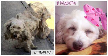 Самая запущенная собака в мире стала красавицей! Пудле-такса прячет еду в диван... и улыбается)