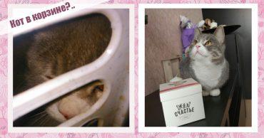 Из корзины для грязного белья, обмотанной скотчем, с укором смотрели глаза... Это прибыл счастливый кот!