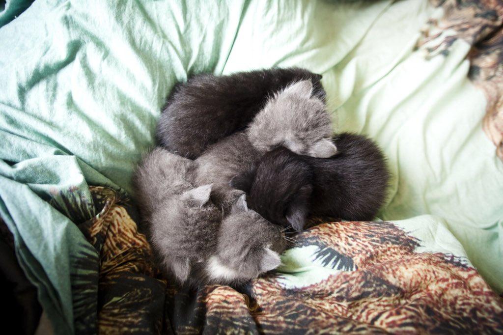 Удивительная находка - прямо на Пасху! Праздничная история о котиках, которые прикинулись... конфетами!) рис 9