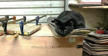 Котёнок прятался за мусорным баком... Но увидев человека, он стремглав бросился ему навстречу!