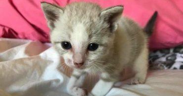Котёнок застрял под трейлером... Он хотел убежать, но что-то держало его лапку!