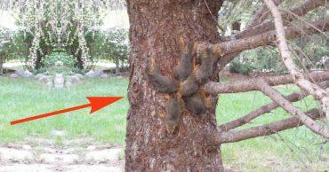Странное существо сидело на дереве! Оно дёргалось из стороны в сторону и не двигалось с места...