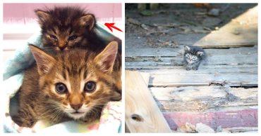 """""""Мы стали перед бульдозером, чтобы защитить малышей!"""" История котёнка, спасшего 60 пушистых душ"""