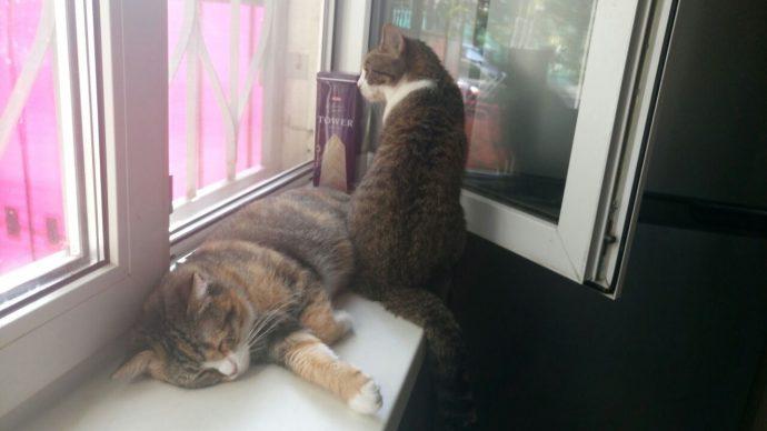"""""""Утопить тебя что ли, Долли?"""" Хозяйка устала находить замерзших котят, открывая дачу по весне... рис 8"""