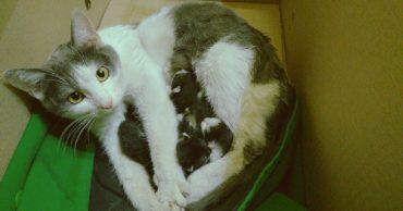 Счастье есть! Кошки-крошки оказались в нужное время в нужном месте...