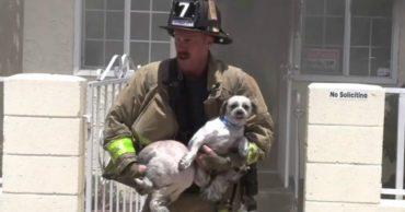 Браво! Хозяева бросили собак в горящем доме, но храбрый пожарный их спас!