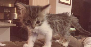 Потеряшка пряталась от людей, надеясь, что мама за ней вернётся! Но за котёнком пришла совсем не мать...