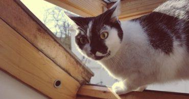 Мёдом намазано?) Хозяин хотел отучить кошку гулять по крыше, поэтому придумал план!