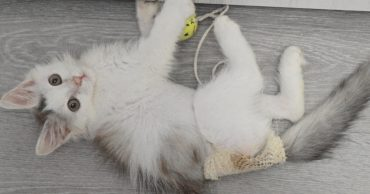 Новости про котёнка Степу из Волжского: мы выздоравливаем! :)