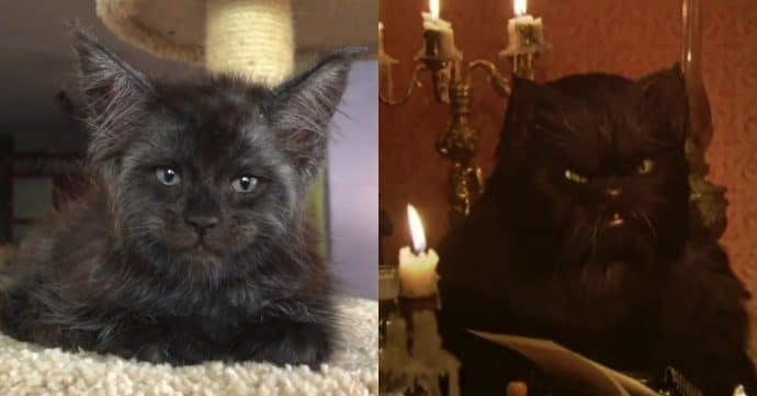 Кот с человеческим лицом и Кот Бегемот