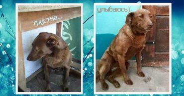 Она ждала этот миг 2 года! Собака жила с опущенной головой, пока однажды не почуяла чудесный запах...