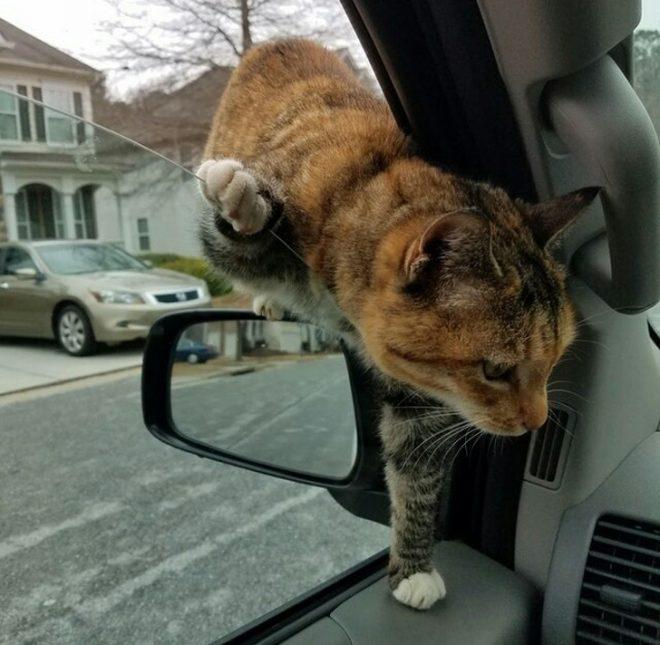 кот перелазит через окно