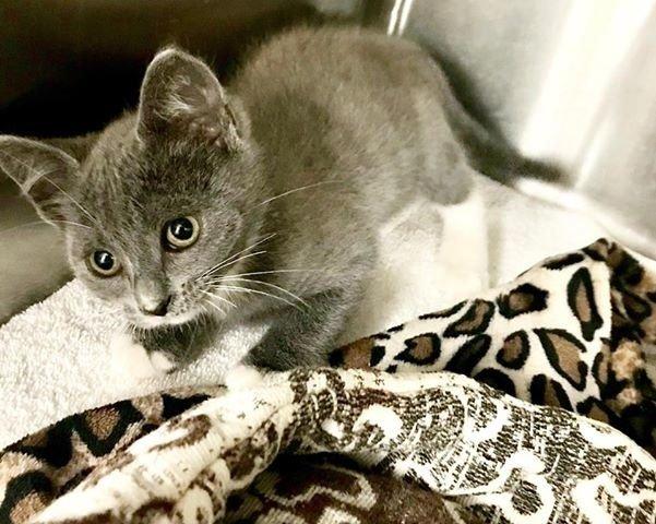серый котенок на кровати