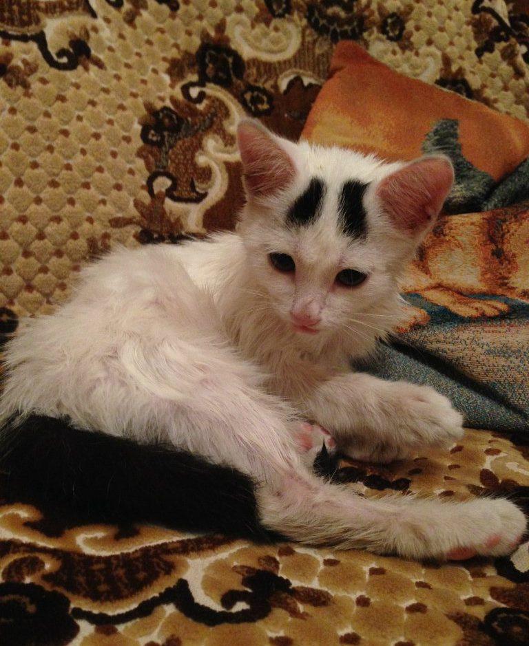 кошка с бровями на диване