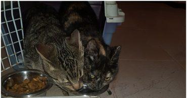 Жизнь меняется, когда в ней появляется кот! Две счастливые истории о бездомных мурлыках
