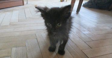 Чёрным котам тоже везёт! Испачканный цементом малыш и обиженная кошка знали, что счастье близко...