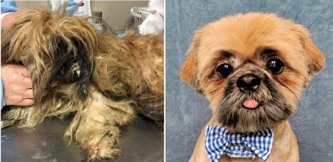 собачка до и после