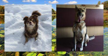 Он мечтал о большой собаке... Но на отдыхе парень нашёл семерых щенков!