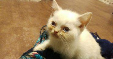 Девушке вручили котёнка в темноте! Приехав домой, она поняла, что с малышом что-то неладно...