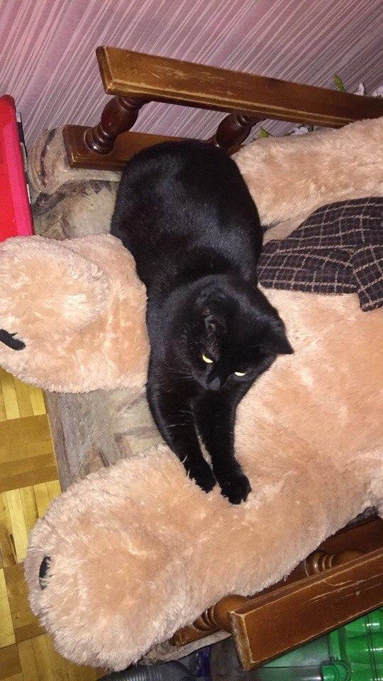 кот лежит на плюшевом медведе