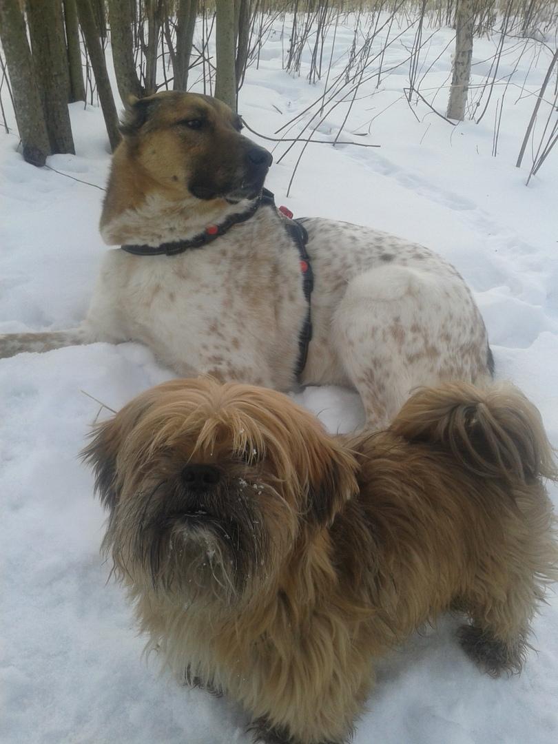 собаки на прогулке