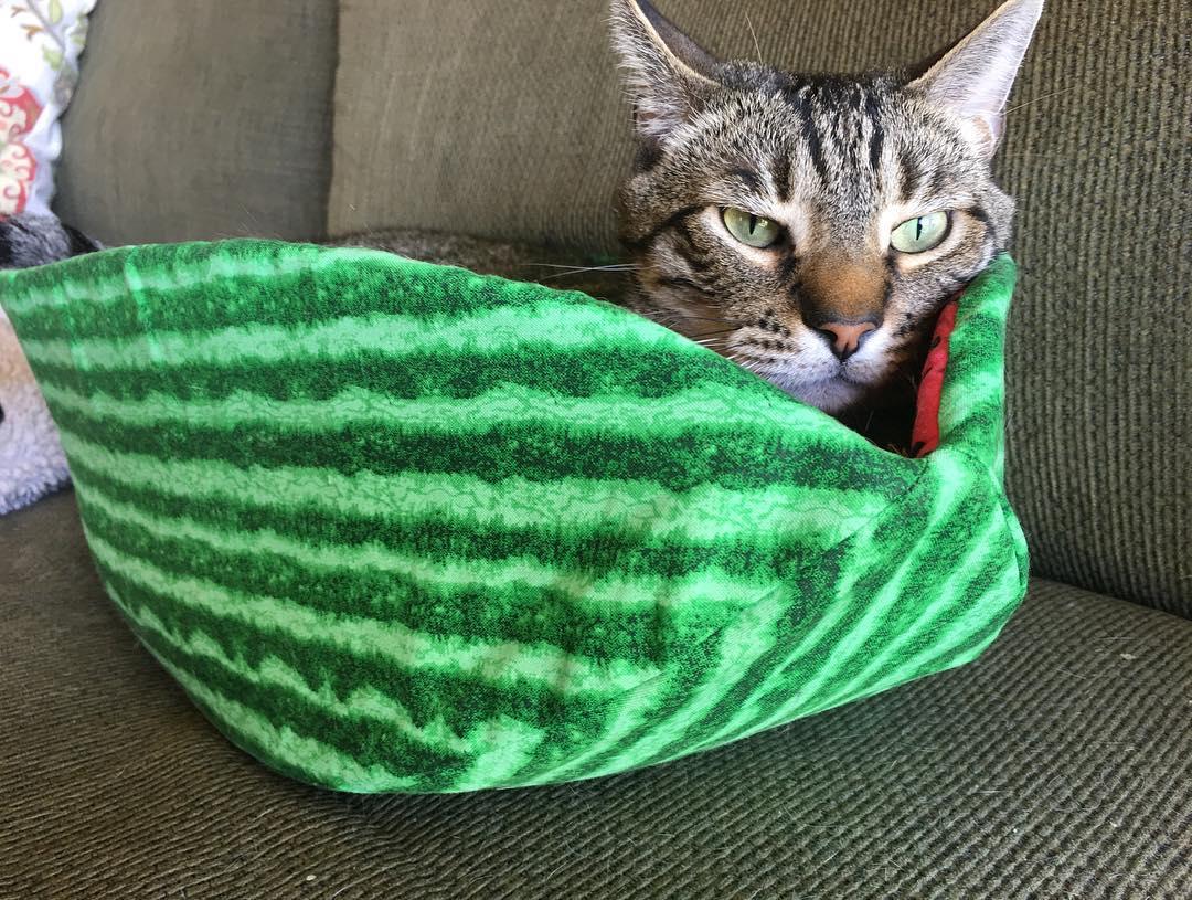 полосатый кот спит в кровати в виде арбуза