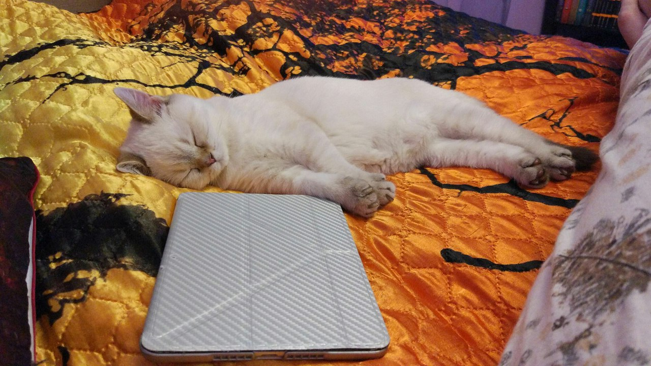 белый кот лежит у ноутбука