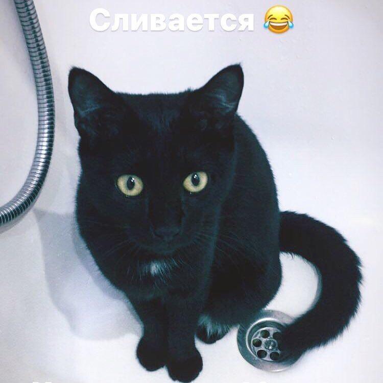 черная кошка сидит в ванной