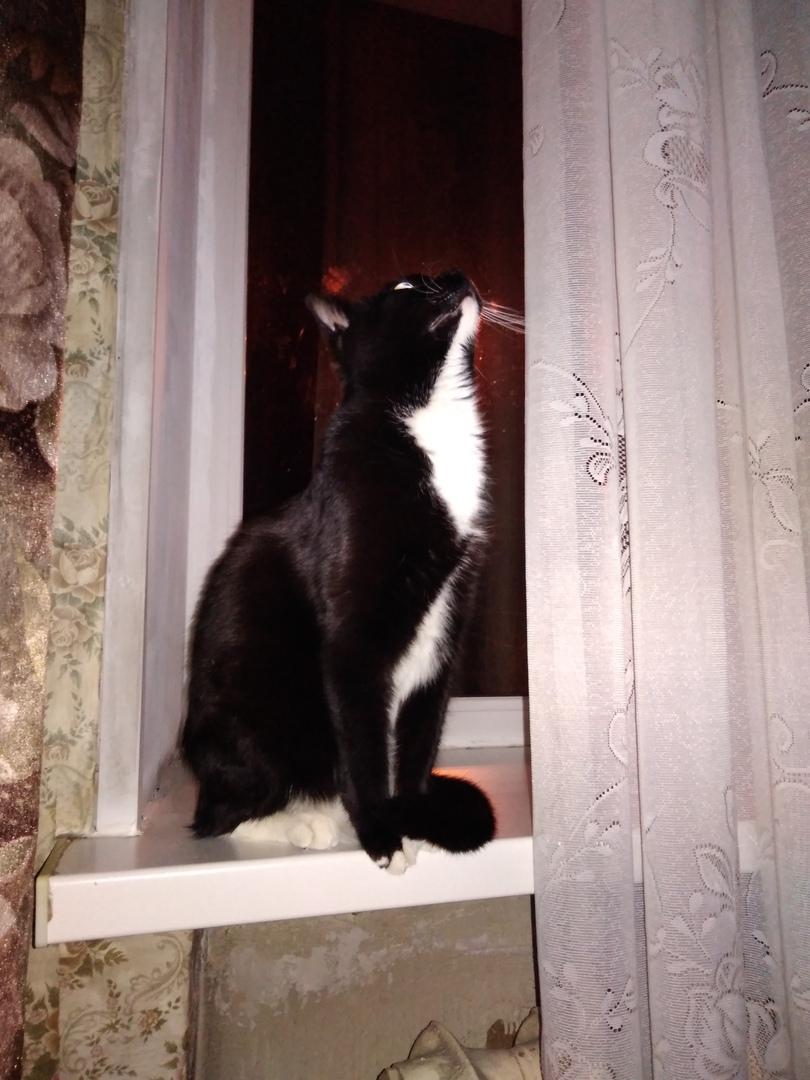 черно-белый кот на окне