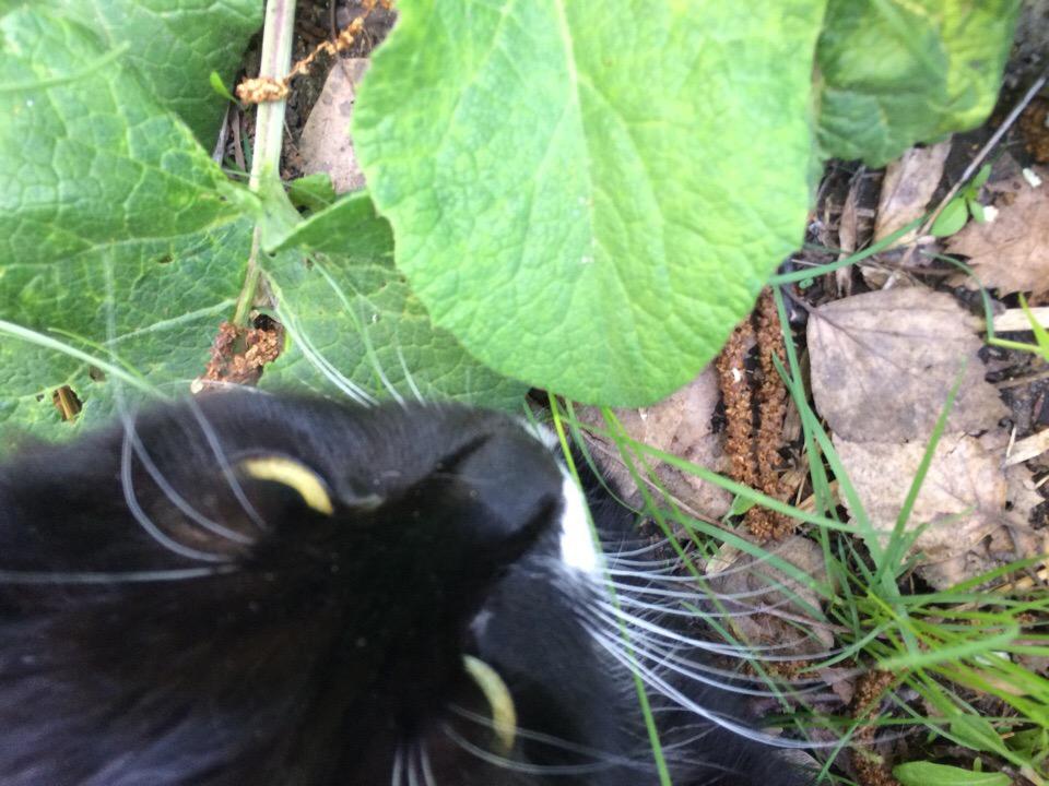 кошка сидит в траве