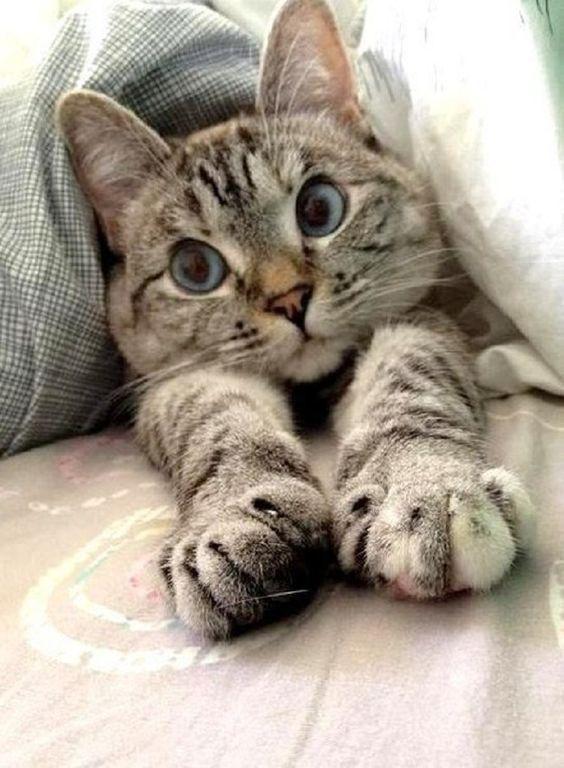 кот потягивается