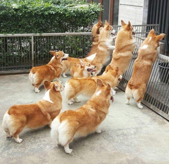десятки собак