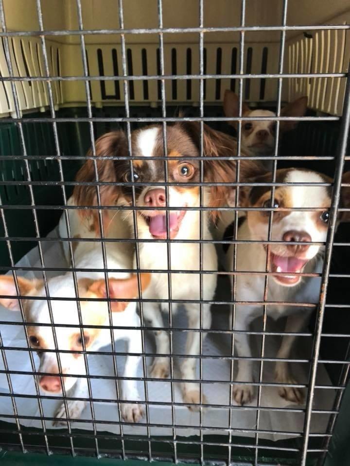 собаки в клетках