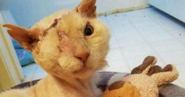 Кот с обожженной мордочкой пришел к дому, где его кормили... Но сейчас он несет в мир добро!