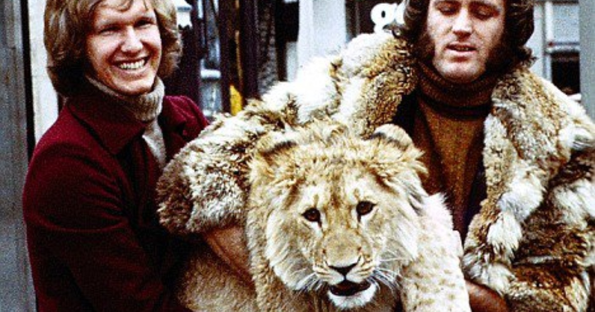 львенок на руках