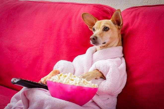 собака с попкорном