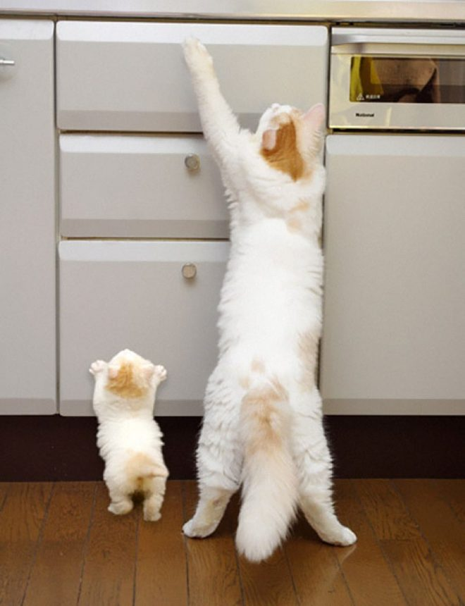 кошка и котенок
