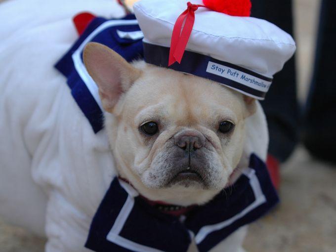 собака-моряк