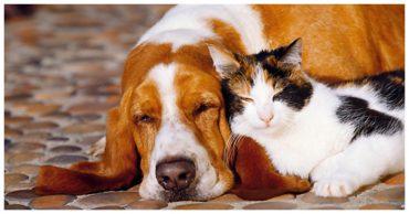 пес и собака