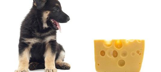 пес и сыр