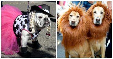 Парад собачек на Хэллоуин: подборка смешных фотографий питомцев в красочных нарядах