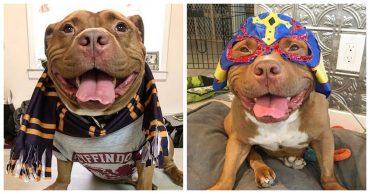 Собака-«улыбака»: обаятельный питбуль, который умеет улыбаться