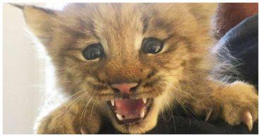 Мужчина нашел в траве маленького котенка, но позже выяснилось, что малыш – вовсе не кот!