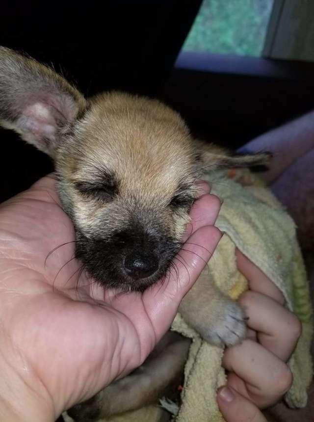 маленький щенок на руках