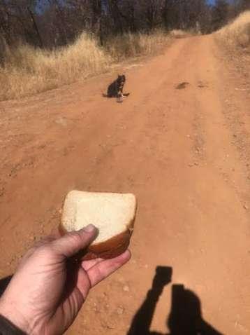 собаке дают хлеб