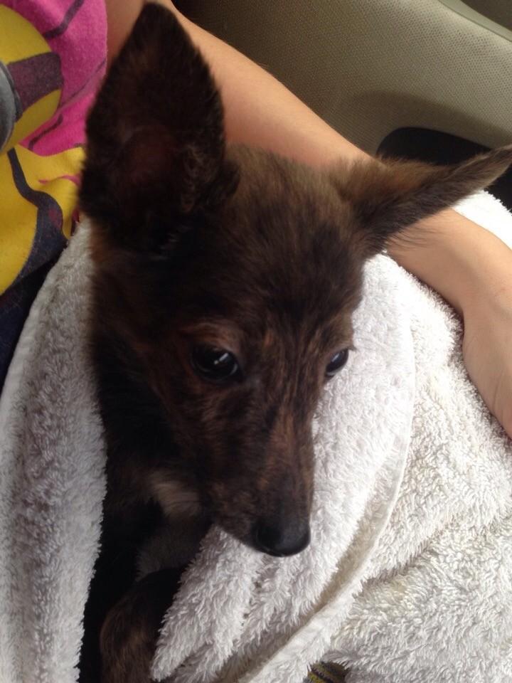 щенок в полотенце