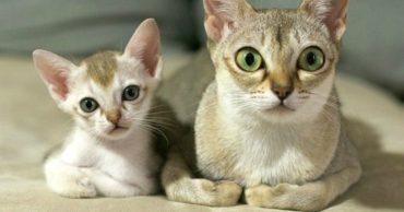 """""""Я люблю тебя, малыш!"""" 10 самых милых фото кошек с котятами"""