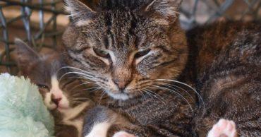"""Сердитый пожилой кот не доверял никому, но сейчас он превратился в ласкового """"дедушку""""!"""