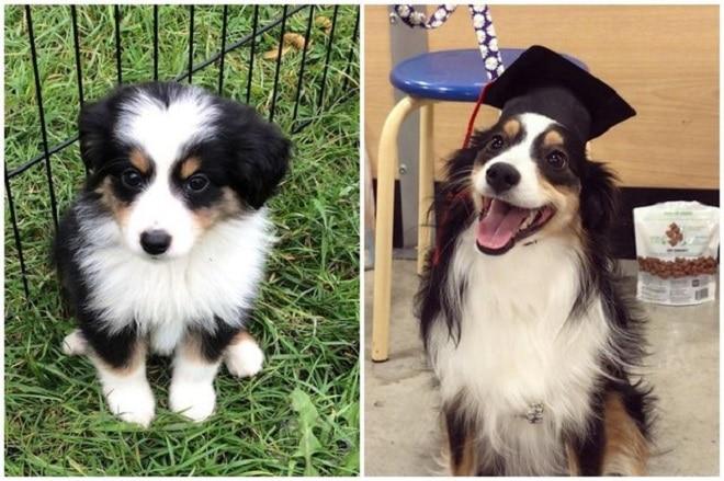 Собака-студент